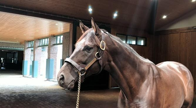 Ask A Stallion Groom Questions for 9/26/18