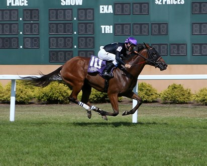Redemption Day, half sister to Multiple G1 winner IMPROBABLE  wins MSW at Indiana Grand